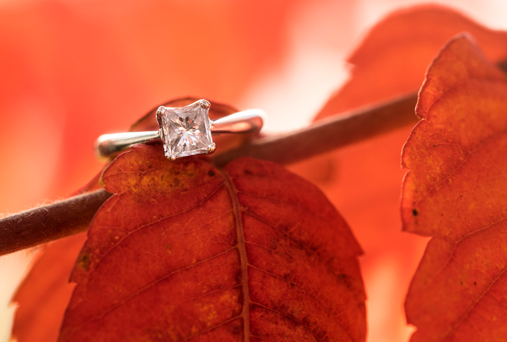 Will & Sarah | High Falls | Muskoka Engagement Photography15